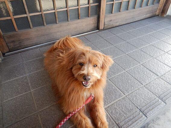 かどや食堂の前で待つ犬