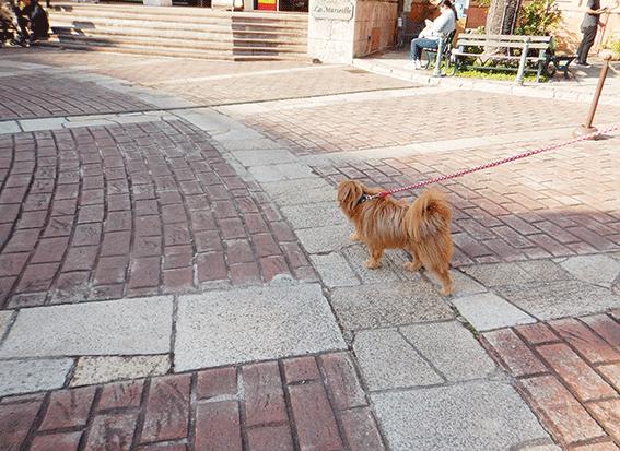 ポルトヨーロッパを歩く犬