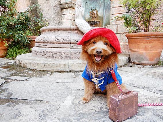 パディントンコスプレの犬とヨーロッパの風景写真