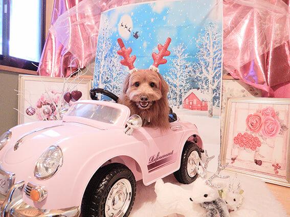 ピンクの車に乗る犬の写真