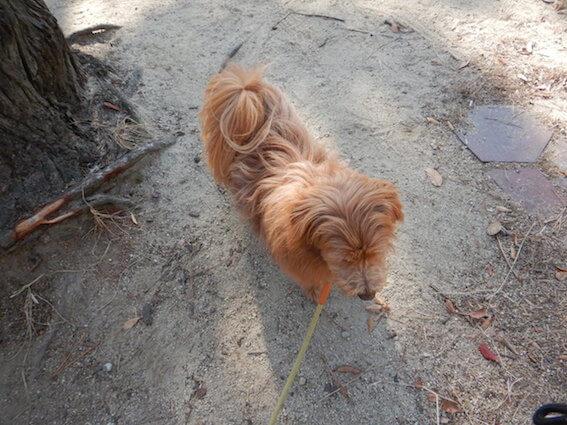 何かを見る犬