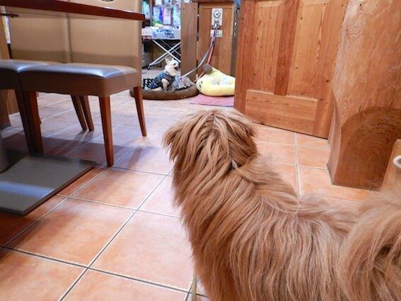 犬を見る犬