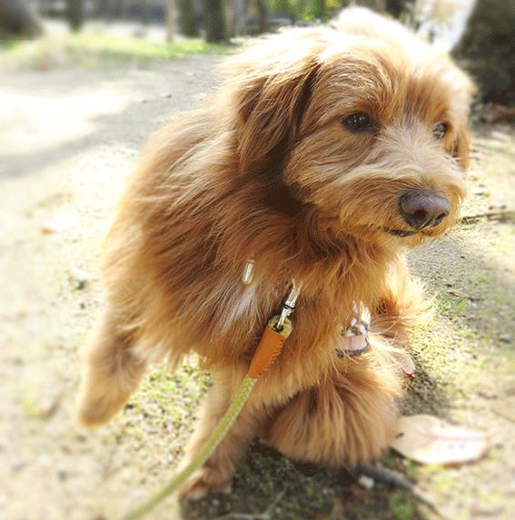 背中越しに何かを気にする犬