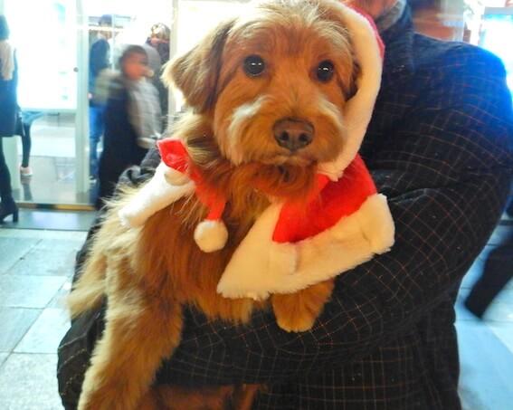 サンタ帽をかぶっている犬