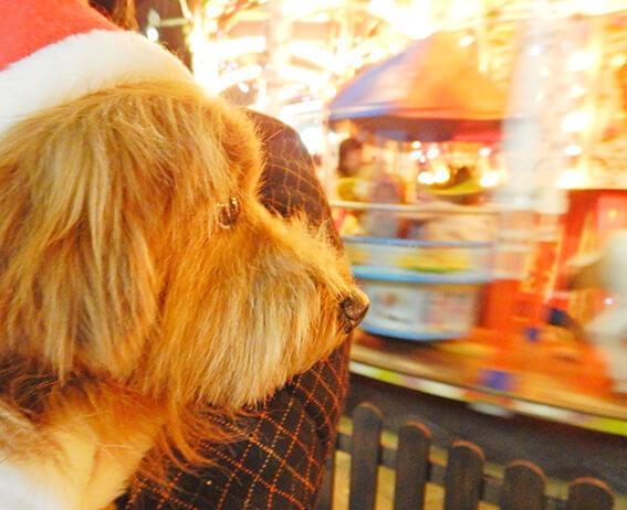 メリーゴランドを見つめる犬