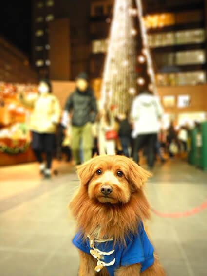 ドイツ・クリスマスマーケットの写真