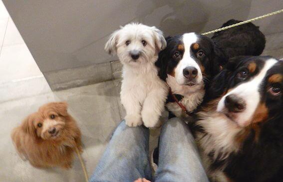 可愛くなった保護犬たちの写真