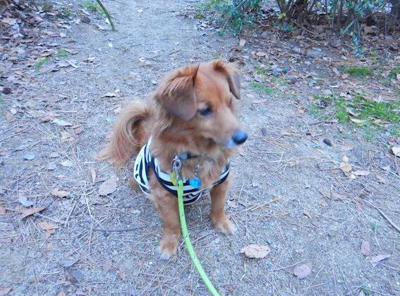 MIX犬の写真