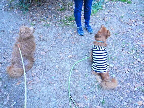 背中を向ける犬の写真