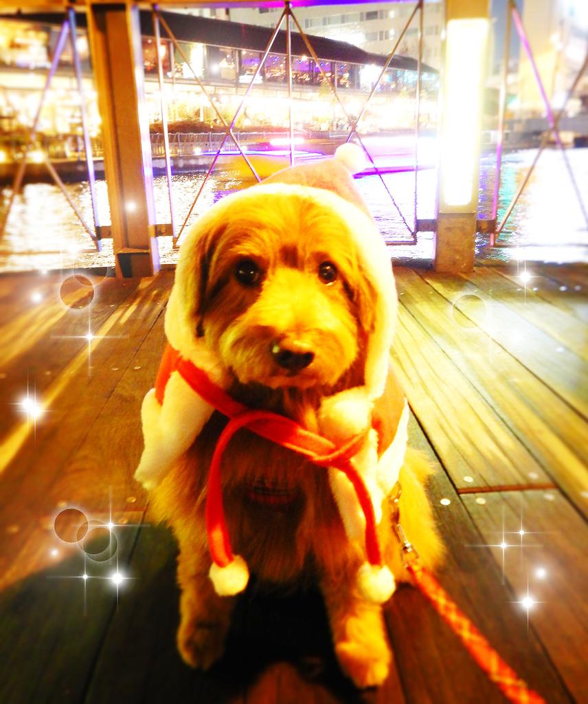 サンタコスプレの犬の写真