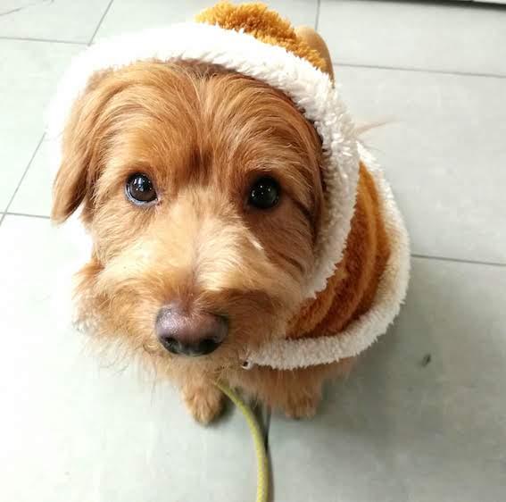 トナカイのかぶりものを着る犬
