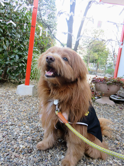 羽織袴を着た犬