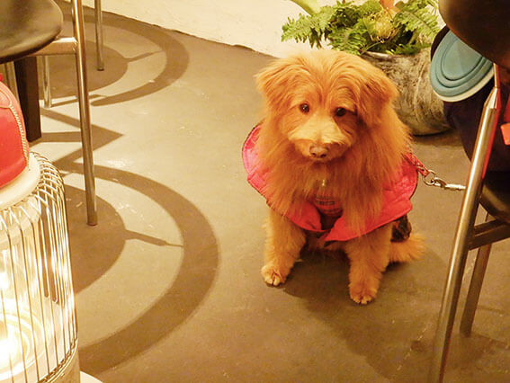 チェックのコートを着た犬