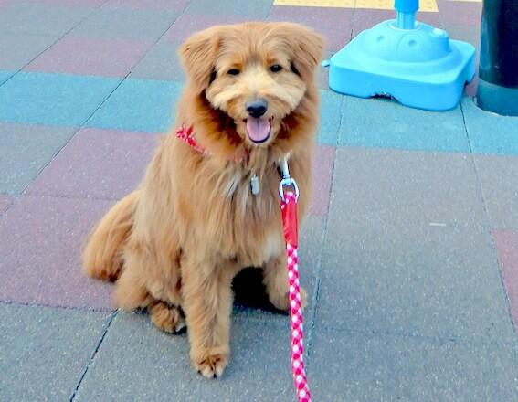 お店の外で待っている犬