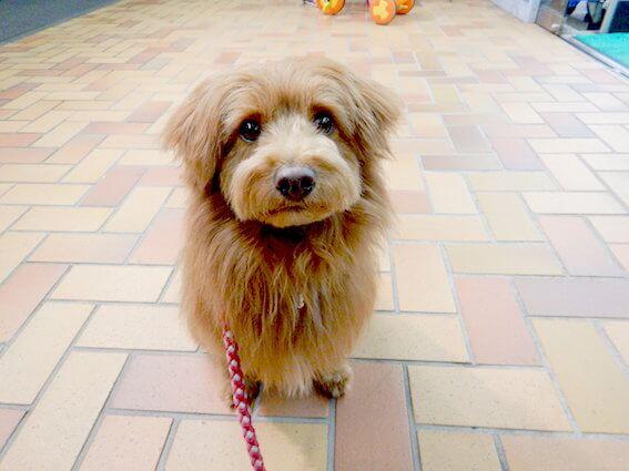 不思議そうな顔で見上げる犬