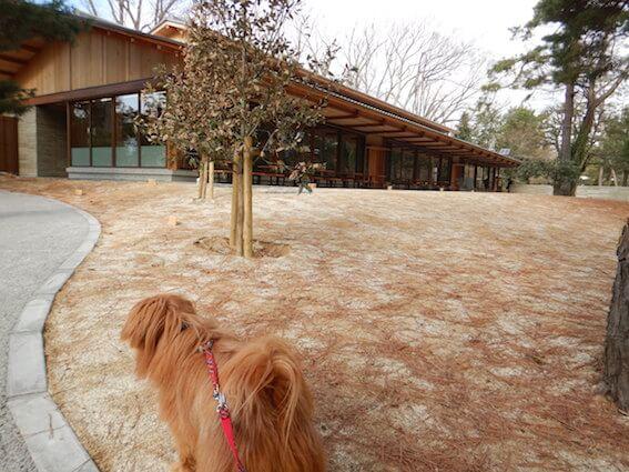 京都御苑の休憩所