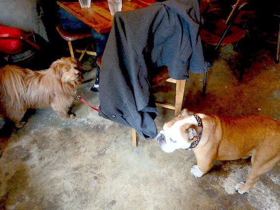 ブルドッグとMIX犬
