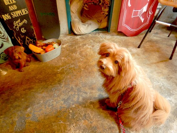 お店のおもちゃを遊ぼうとしている犬