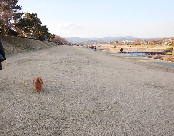 鴨川を散歩する犬