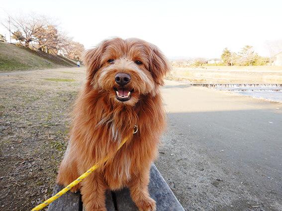 鴨川の河原を散歩する犬