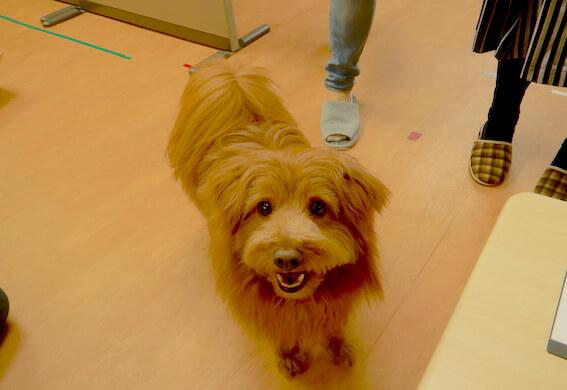 笑顔で見上げる犬の写真