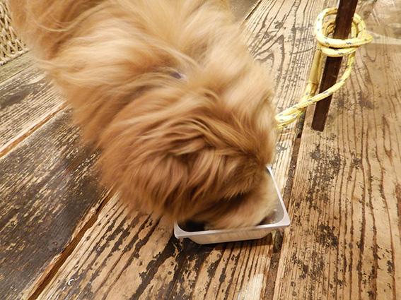 Cafe&Bar CHAMの犬ご飯を食べる犬