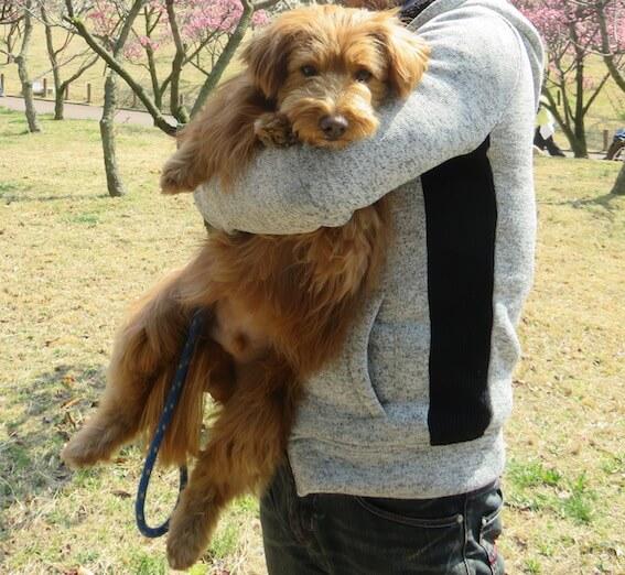 抱っこされる犬の写真