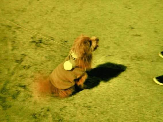 ボールを投げてもらうのを待つ犬