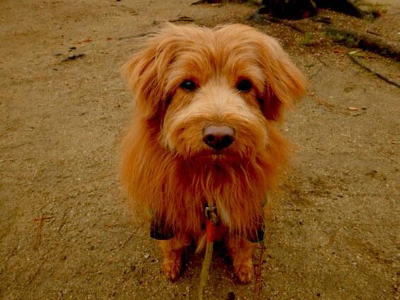 ムッとした犬の顔