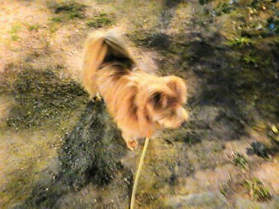 夜の公園で散歩する犬
