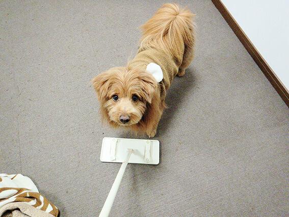 フロアワイパーと遊ぶ犬