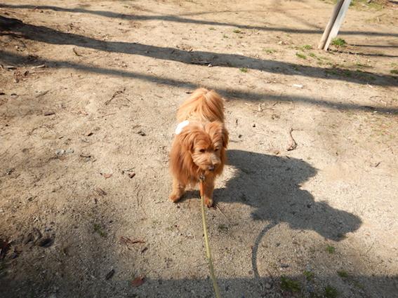 警戒している犬の写真