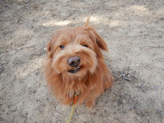 悪い顔の犬