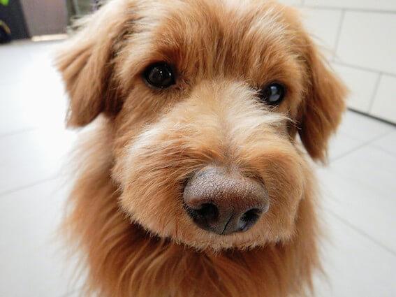 不安そうな犬の写真