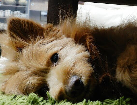 横になってる犬の写真