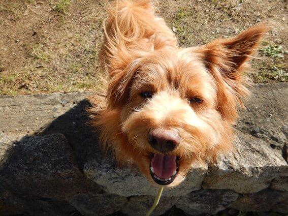 片耳上げている犬の写真