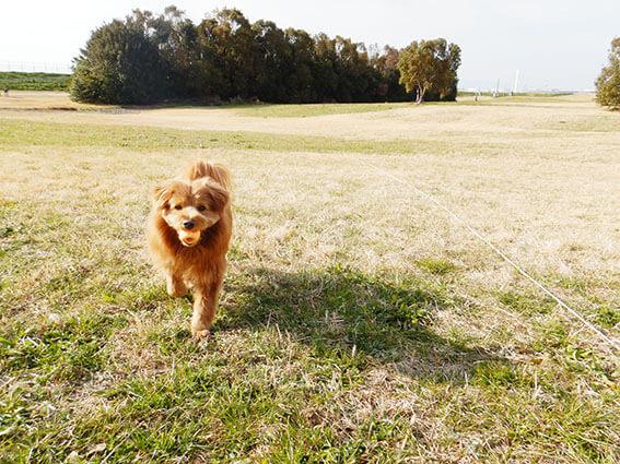 笑顔でボールを持って帰ってくる犬