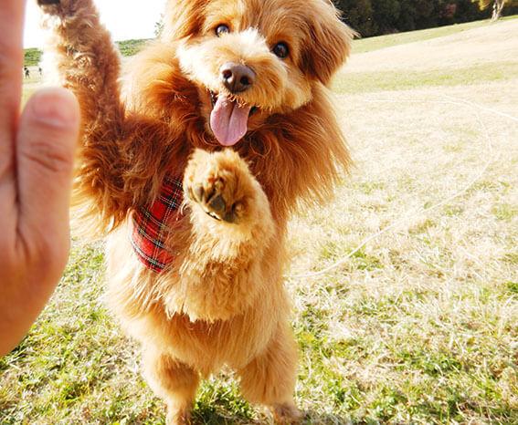 ハイタッチする犬の写真