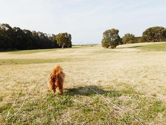 駆け出す犬の後姿の写真