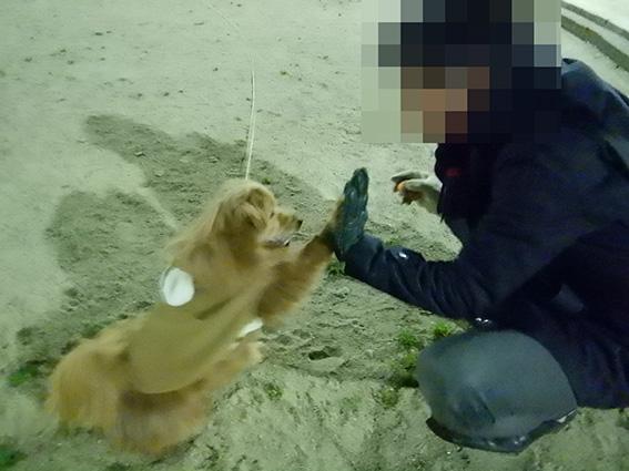 おすわり状態のハイタッチしてる犬の写真