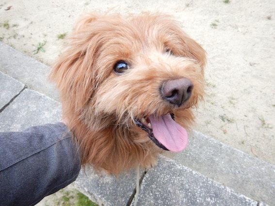 撫でてもらって嬉しそうな犬の写真