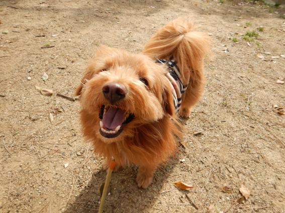 すごい笑顔の犬