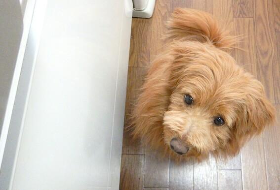 キッチンの足元にいる犬の写真