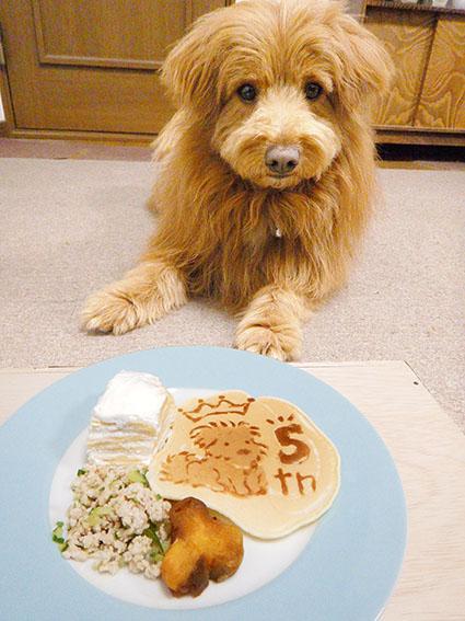 マテさせられている犬の写真