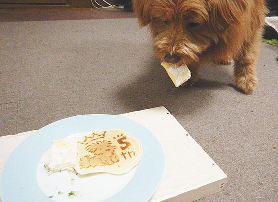 パンケーキを食べる犬