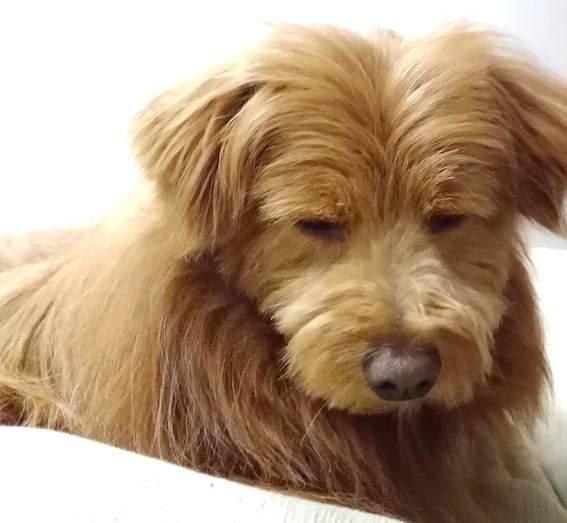 不満げな顔の犬の写真