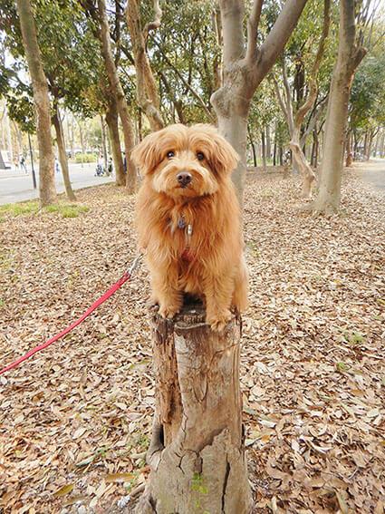 切り株に乗る犬の写真