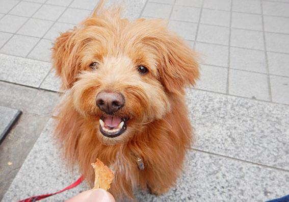 オヤツをねだる犬の写真