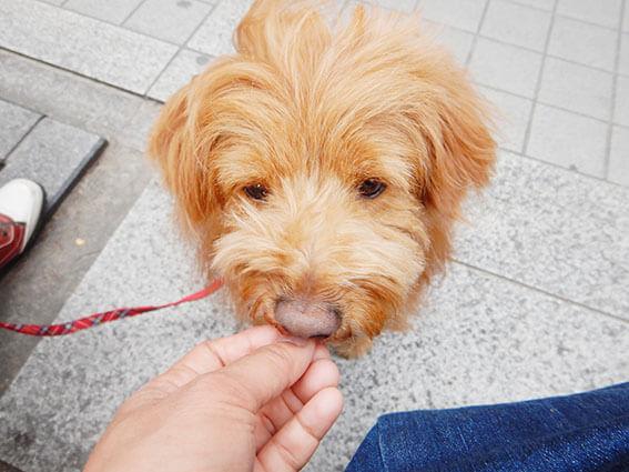 オヤツを食べる犬の写真