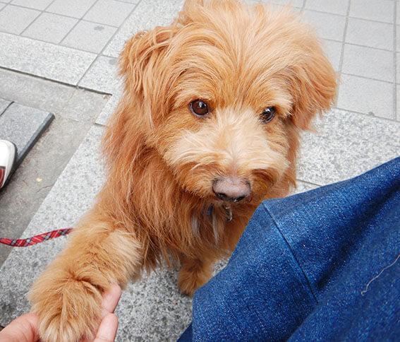 お手をする犬の写真